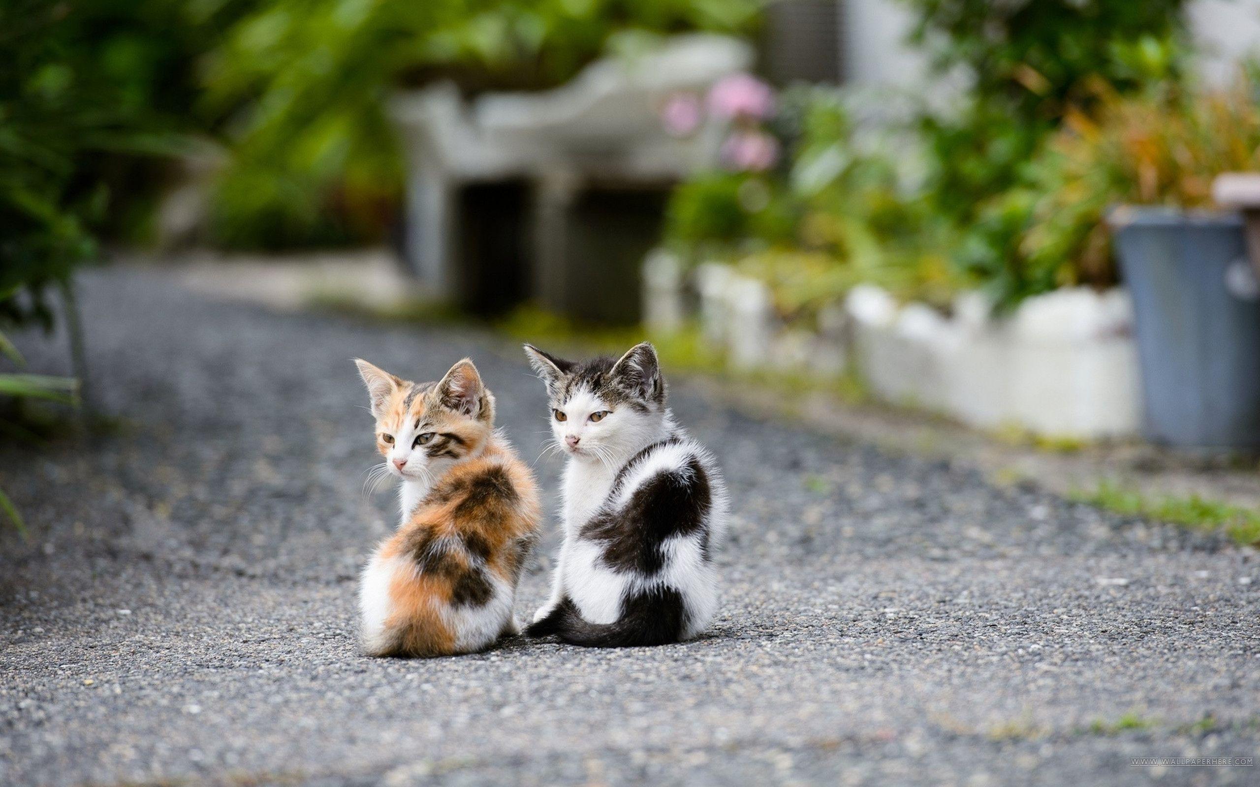 kittens - Buscar con Google