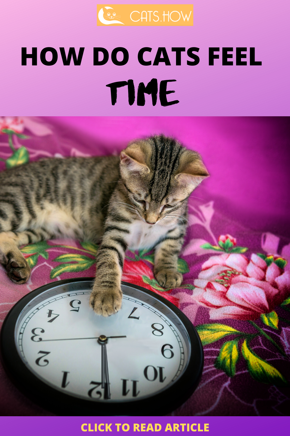 How Do Cats Feel Time Cat Behavior Cats Cat Facts