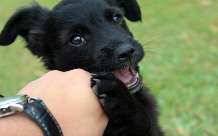 How To Stop A Puppy From Biting Feet And Hands Puppy Training