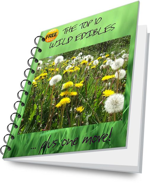 Top 10 Wild Edibles Free E Book Pdf Download Foraging Books