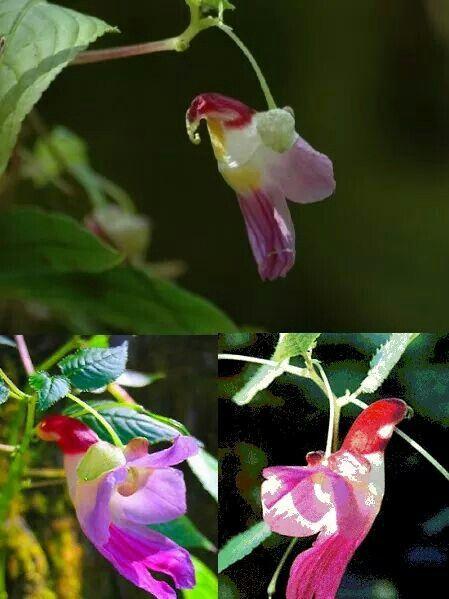 Orquídea exótica, flor de louro