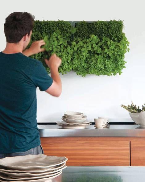 pflanzen pflegen wandbegruenung gruene wand foto wandbegruenung