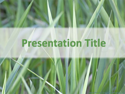 Grasses powerpoint template grass temp pinterest free ppt grasses powerpoint template toneelgroepblik Images