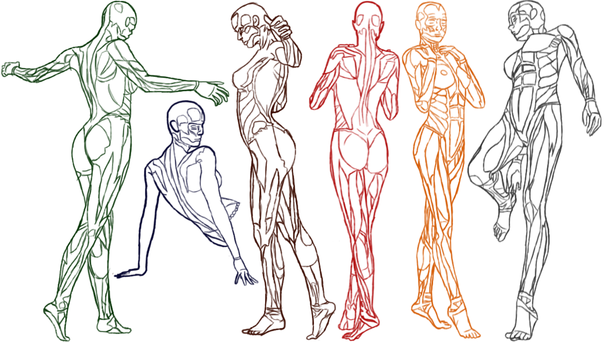 Female Anatomy Practice by Amenarae | Character Design Reference ...
