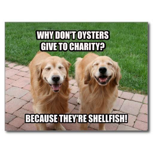 Laughing Golden Retriever Funny Shellfish Joke Postcard Zazzle