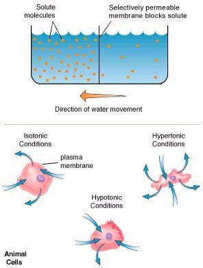 Biology cell help homework molecular