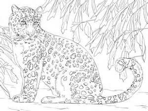 Image Result For Amur Leopard Color Sheet Coloring Pages Detailed Coloring Pages Leopard Art