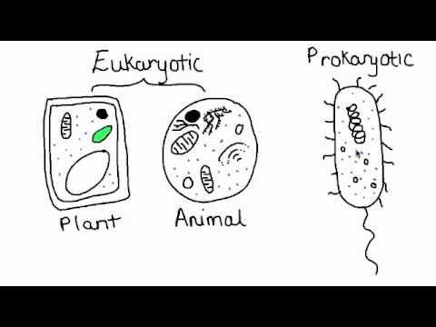 Learn Biology: Cells—Prokaryotic Cells vs. Eukaryotic
