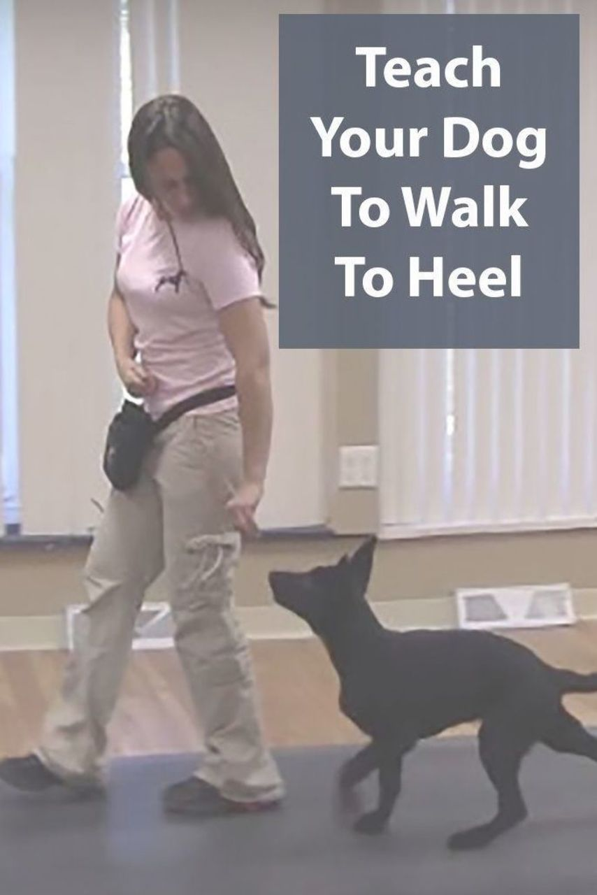 Teach Your Dog To Walk To Heel Being Pulled Down The Street By A
