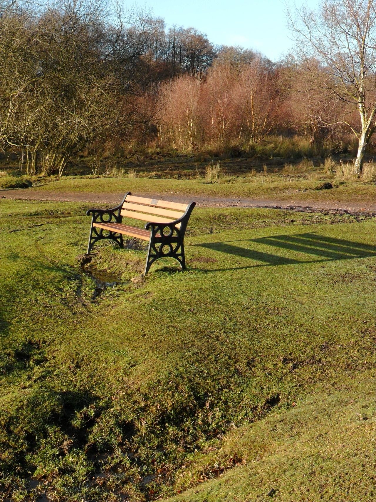 Bench in the winter sunshine at Little Bracebridge Pool, Sutton Coldfield, England