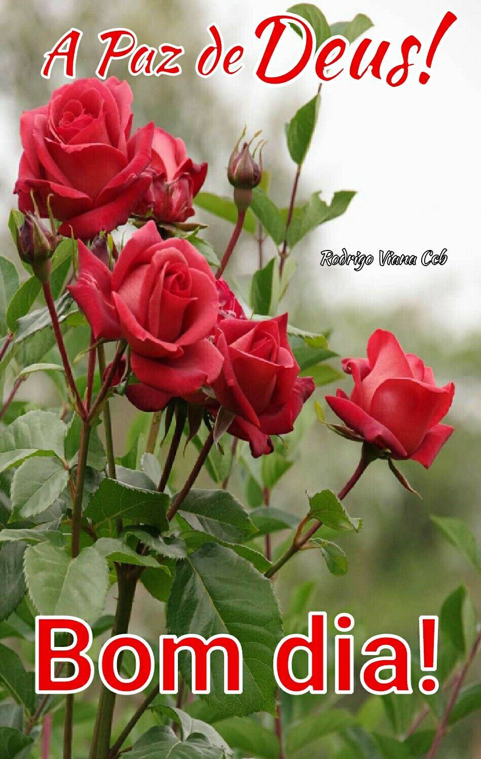 Amem Deus Te Abencoe Mensagens De Bom Dia Meu Dia Com Deus