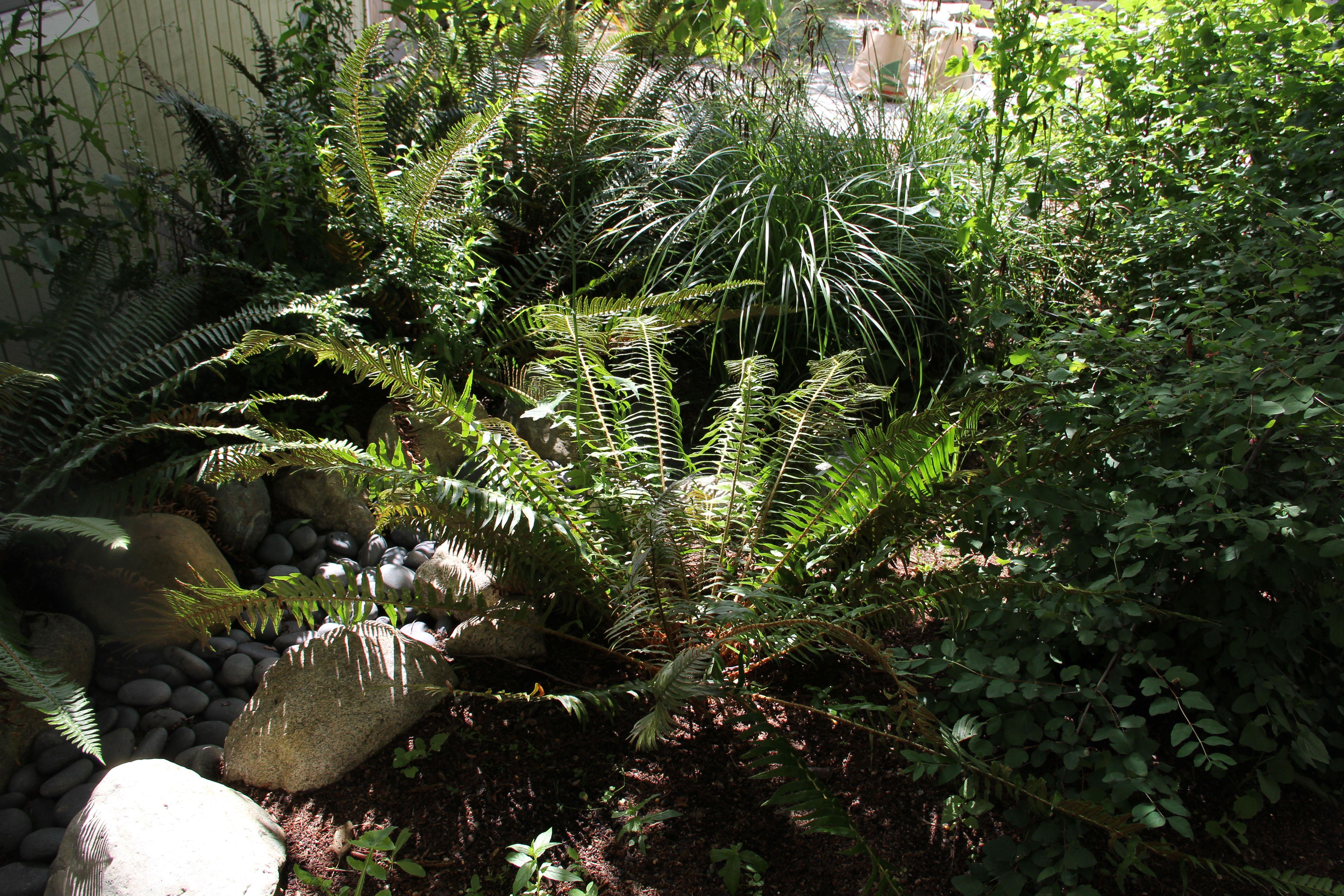 Best Rain Garden With Sword Fern By Microhouse Rain Garden 400 x 300