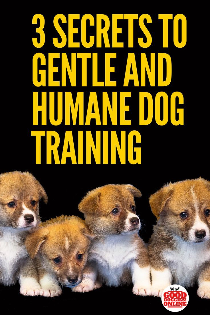 Humane Dog Training Dog Training And Infographics Training
