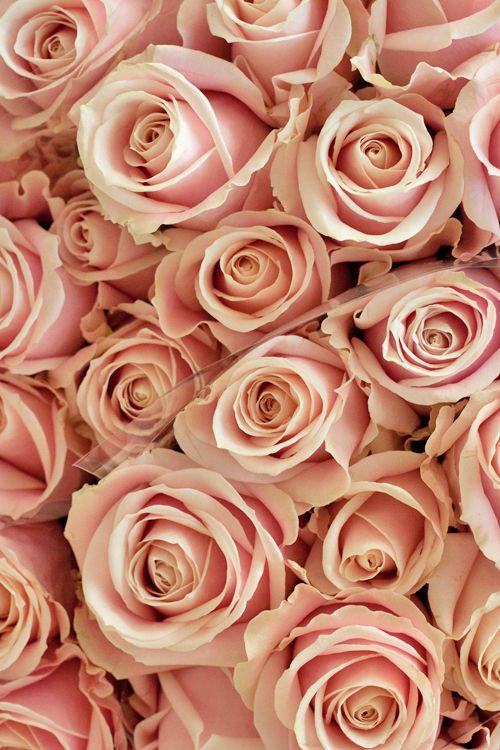 Rose Gold Wallpaper Roses