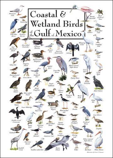 Louisiana Bird Identification Chart click image to view larger