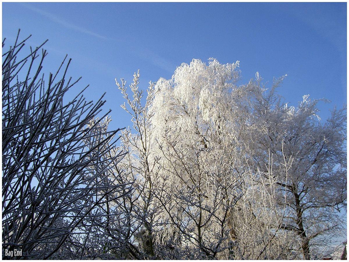 Frosty trees / Kuuraiset puut