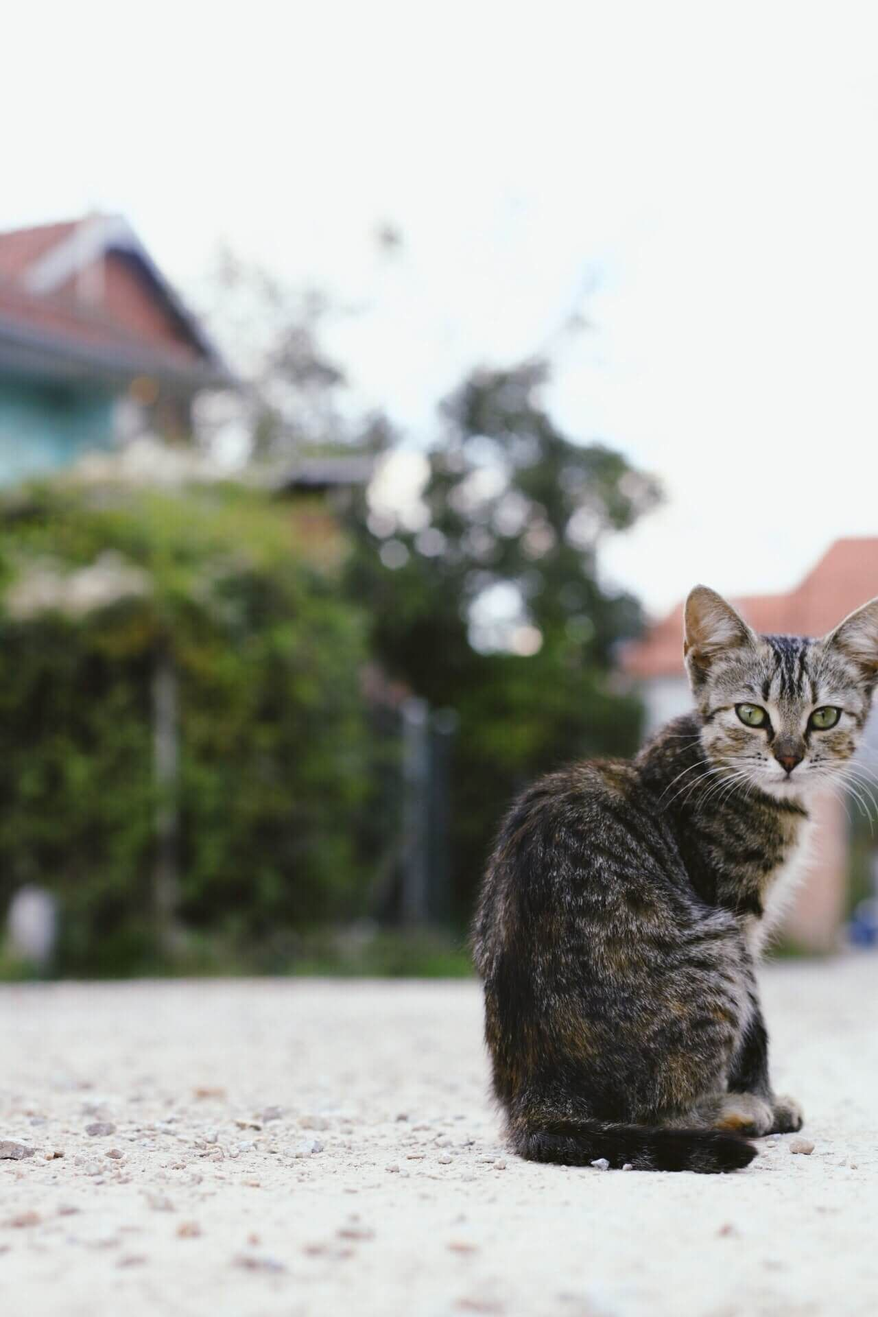 """Cute cat """"to take care of you cat read the description"""" in"""