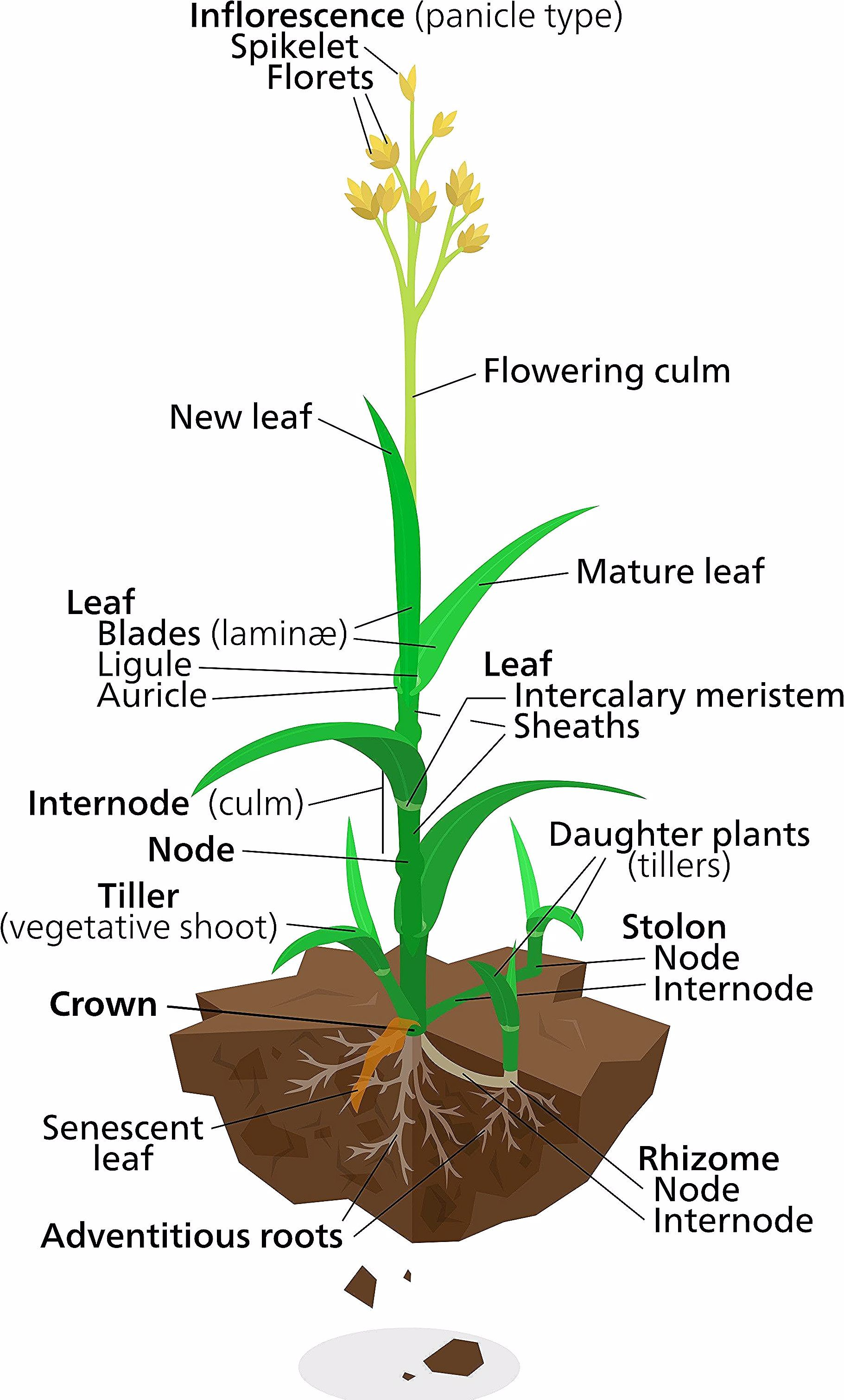 Labeled Diagram Of A Flower Awesome Plant Diagrams In 2020 Plants Plant Life Cycle Diagram Of A Flower