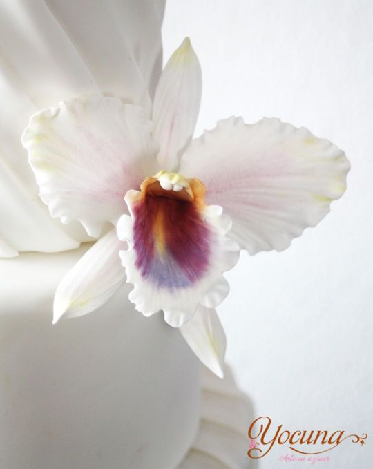 Orquidea Cattleya Orchid Cattleya Gumpaste Cattleya Orchid Orchid Flower Cattleya