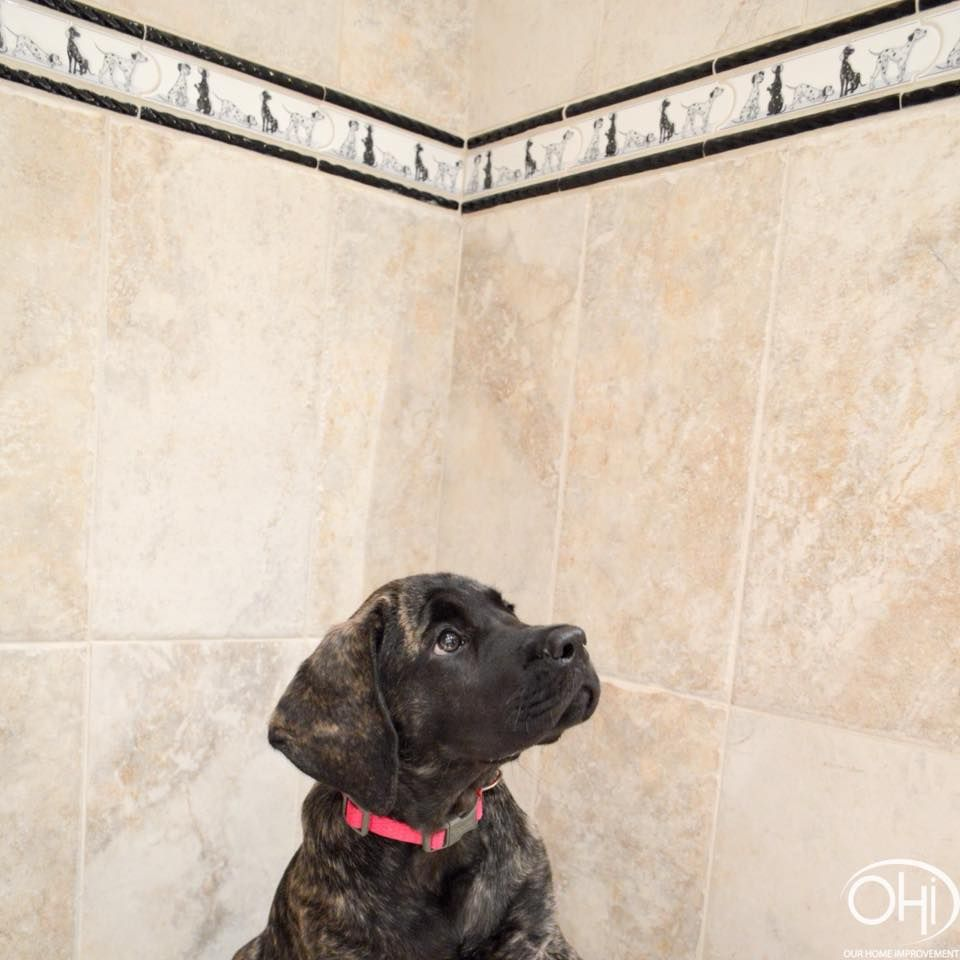Dog Shower With Tile Walls And Floor And A Dalmatian Accent Tile