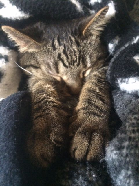 Little One Taking A Nap Animals Kittens Cute Cats