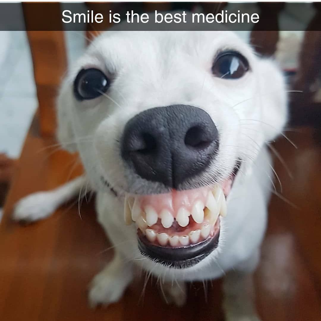 Dogs Cute Smile Petlove Smiling Dogs Baby Dogs Cute Funny Animals