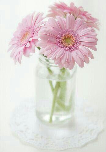 Sencillez Gerberas Rosas Pretty Flowers Pink Flowers Gerbera Daisy