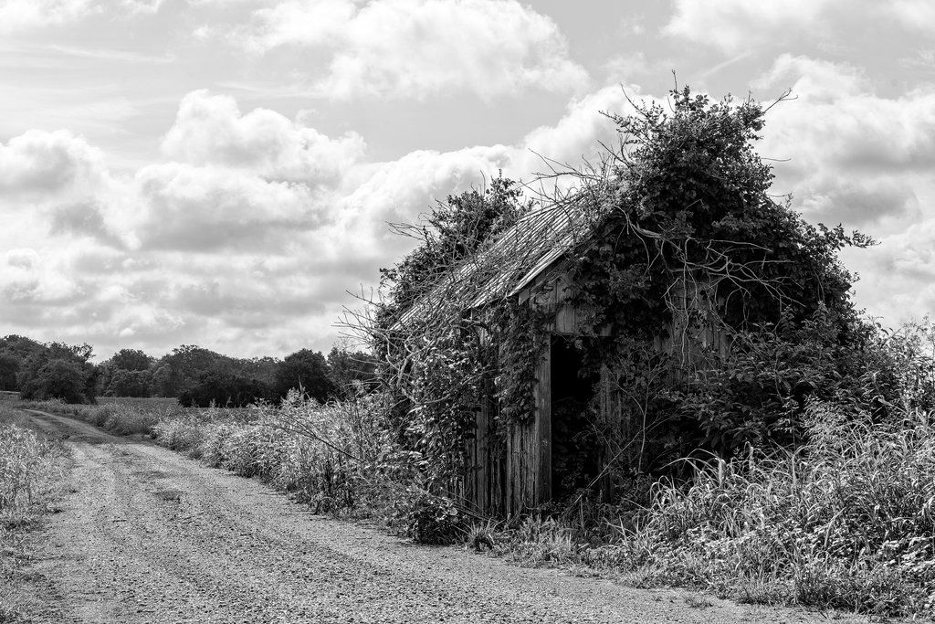 Farm Landscape with Overgrown Shed Black and White