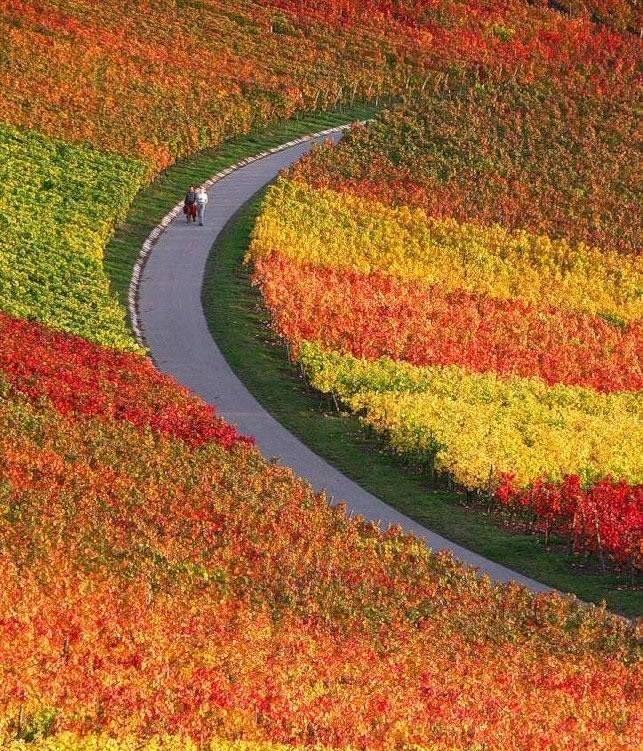 El camino está repleto de colores, sólo depende de ti contemplarlos.