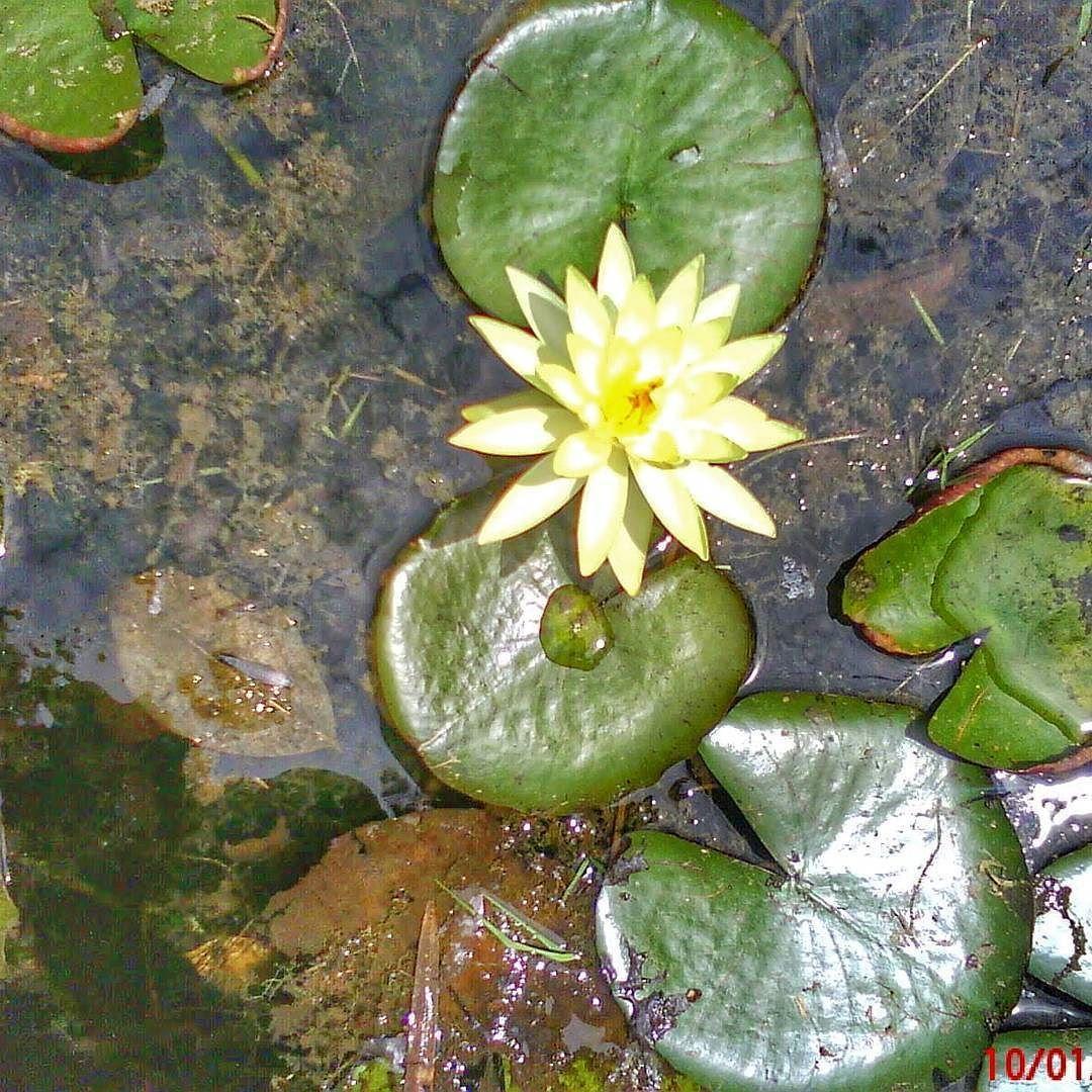 #flores #flowers #nature #natureza #parque #saopaulo