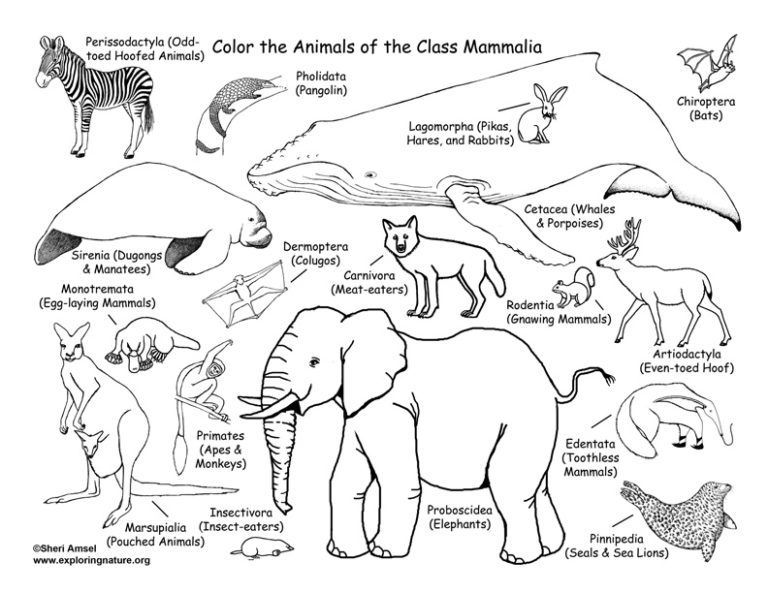 mammals coloring page (classification) – coloring nature