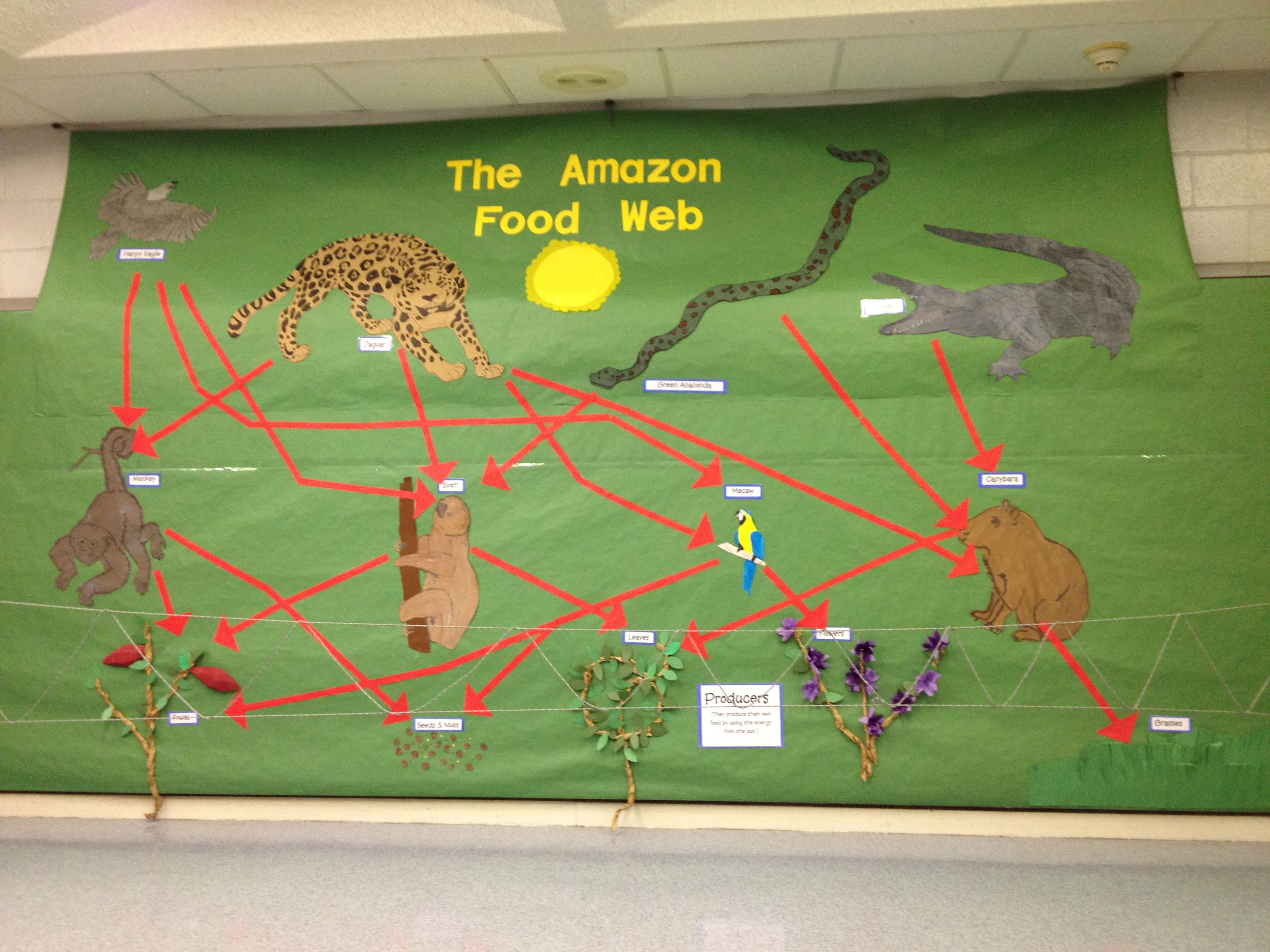 Amazon Rainforest displaying the food web. Part of a