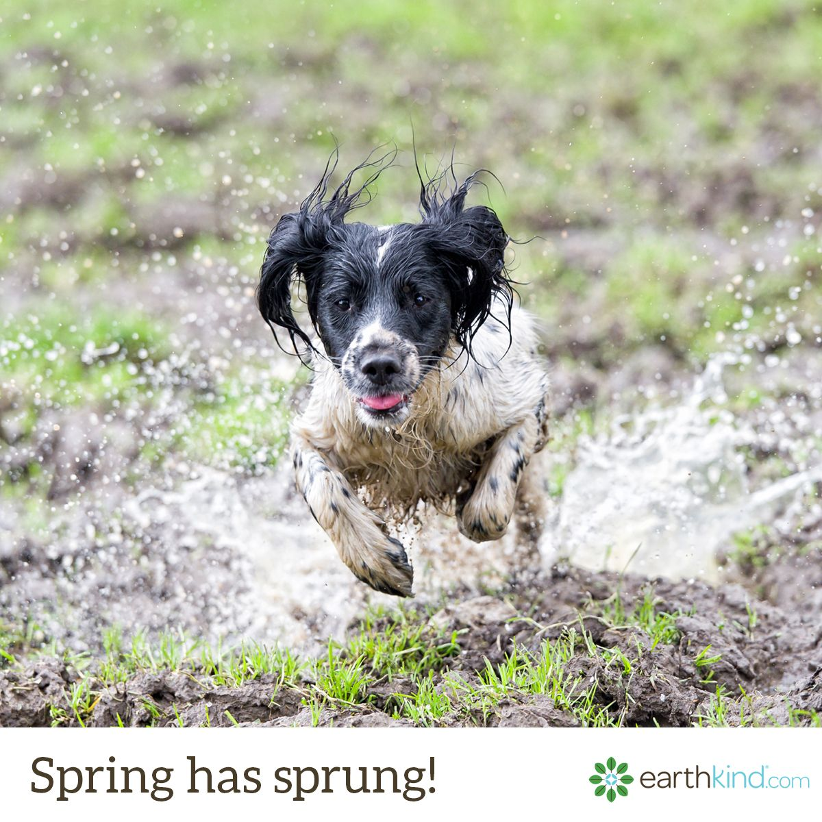 Medium Crop Of Wet Dog Smell