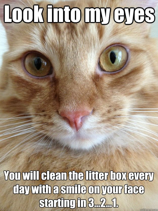 Funny Cat Meme Clean : Quot you can t resist my powers funny memes pinterest