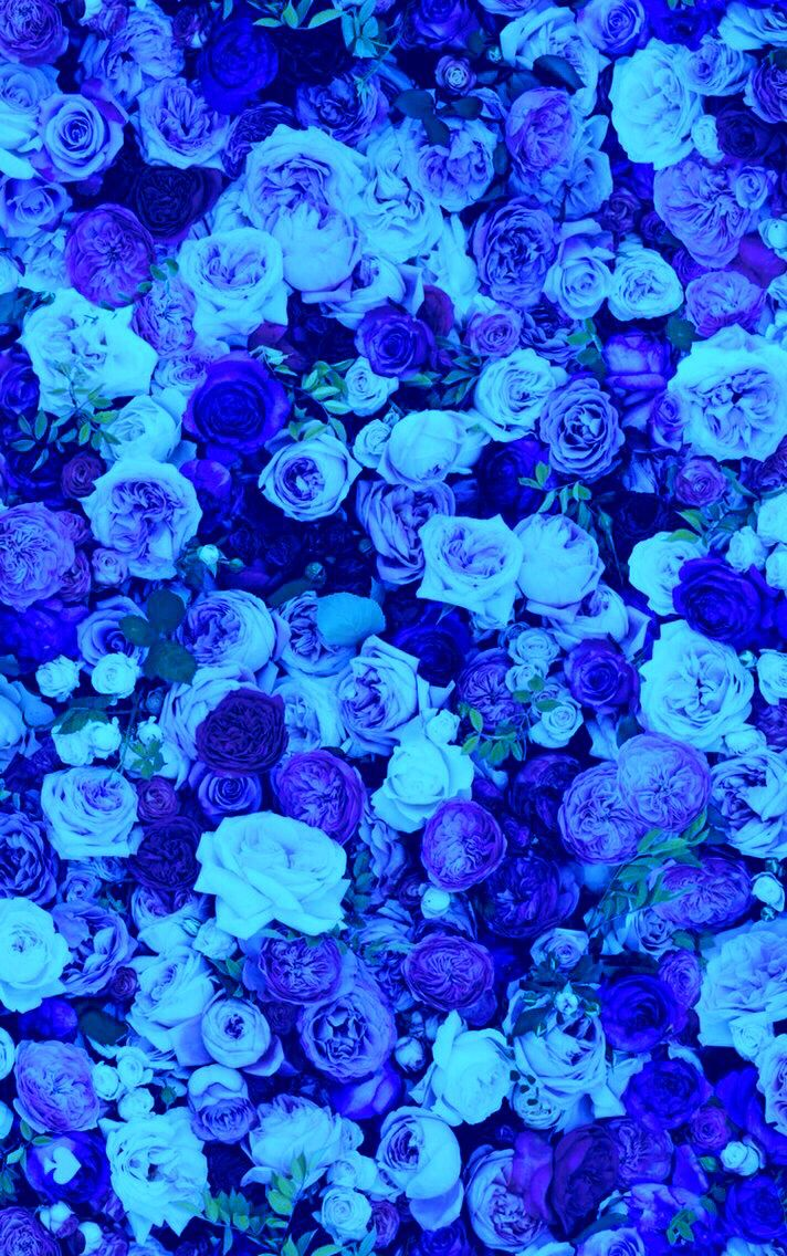 Nature Beautiful Blue Rose Flowers Iphone Wallpaper Background