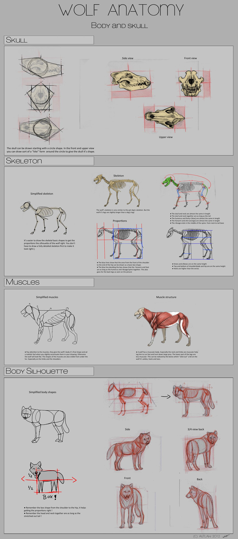 Autlaw - Anatomía del lobo | Creature Design | Pinterest | El lobo ...