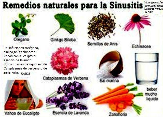 Remedios Naturales Para La Sinusitis Plantasparacurarcom