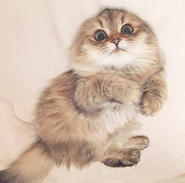 Kittens And Puppies Near Me Considering Easy But Cute Animals To Draw Neither Kittens Meowing Up Cat Adoption Ne Kittens Cutest Cute Animals Funny Cat Pictures
