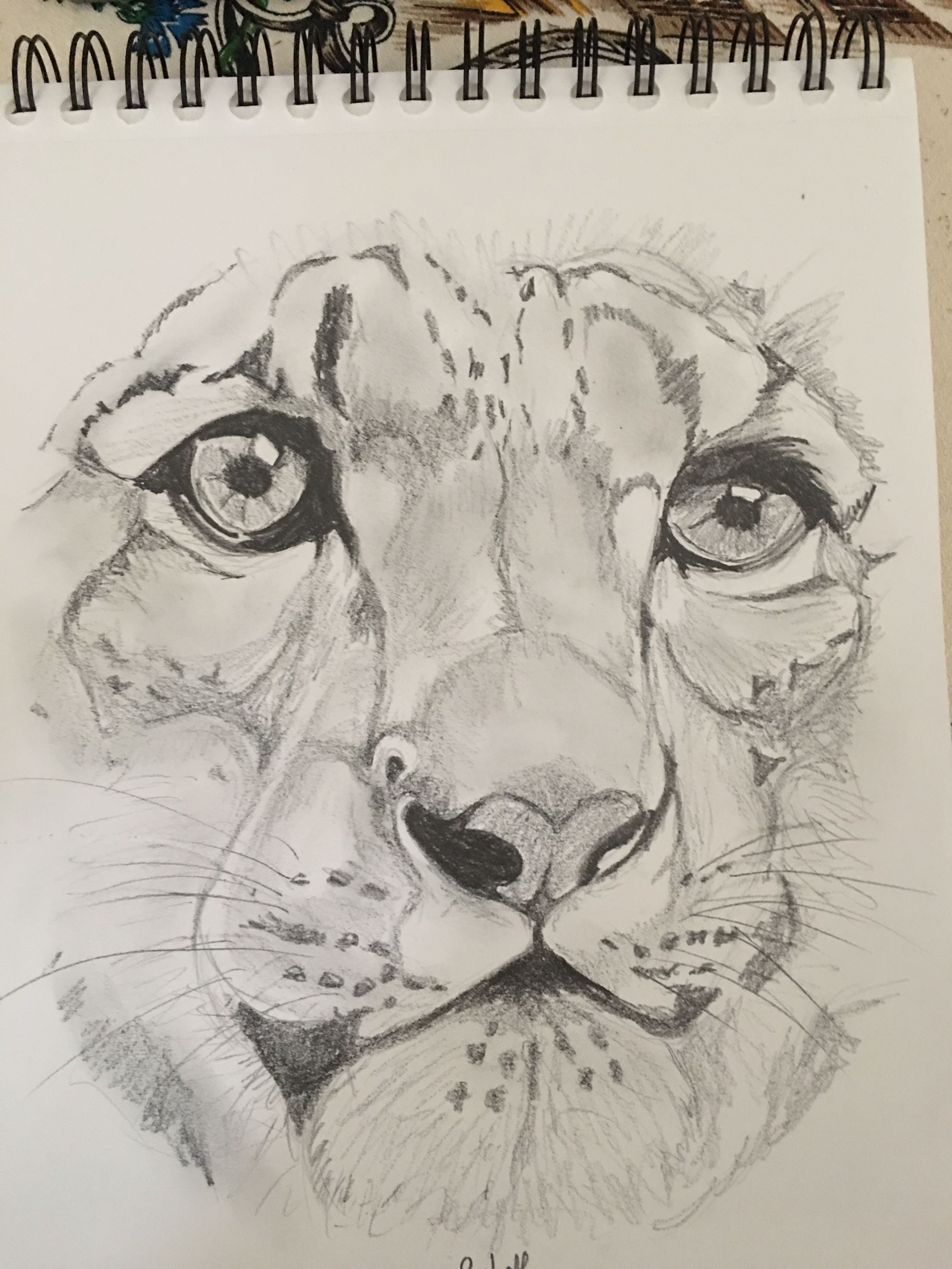 Drawing Ideas For Kids Age 12 : drawing, ideas, Chantal, Nipko, Animals~, Doodle, Drawings, Sketches, Creative,, Animal, Drawings,