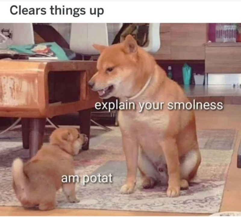 35 Spicy And Delicious New Doggo Memes For You To Chew On