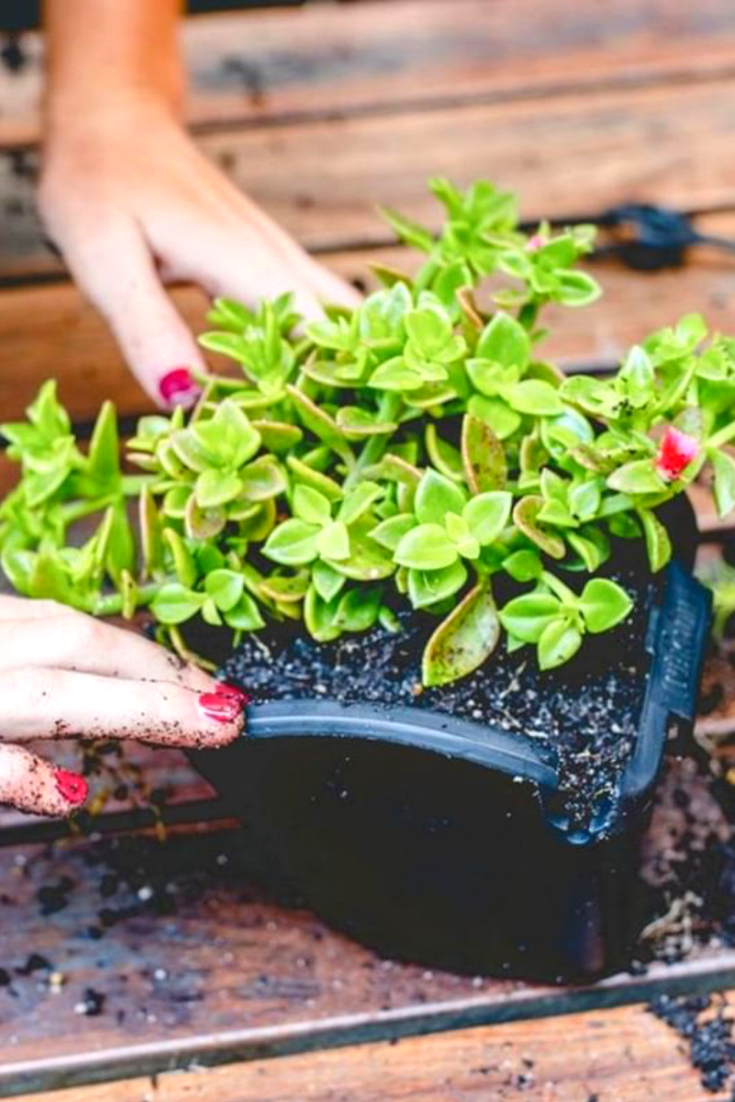 Even though the temperatures are on higher side, With August beginning it's alert time for gardeners. It's time to prep your garden for the next season. What all do you need to do? Find out in the blog today. 💚. 🌿. 🏡. #wednesday #augustgarden #gardenprep #fallgardenprep #growyourown #blogger #urbanfarming #urbangarden #blog #gardenblog #organic #organicfarming #verticalgarden #gardenbed #landscape #prepyourgarden #herbgarden #herbwall #greenliving #watex #watexgreenwalls #watexgreenliving
