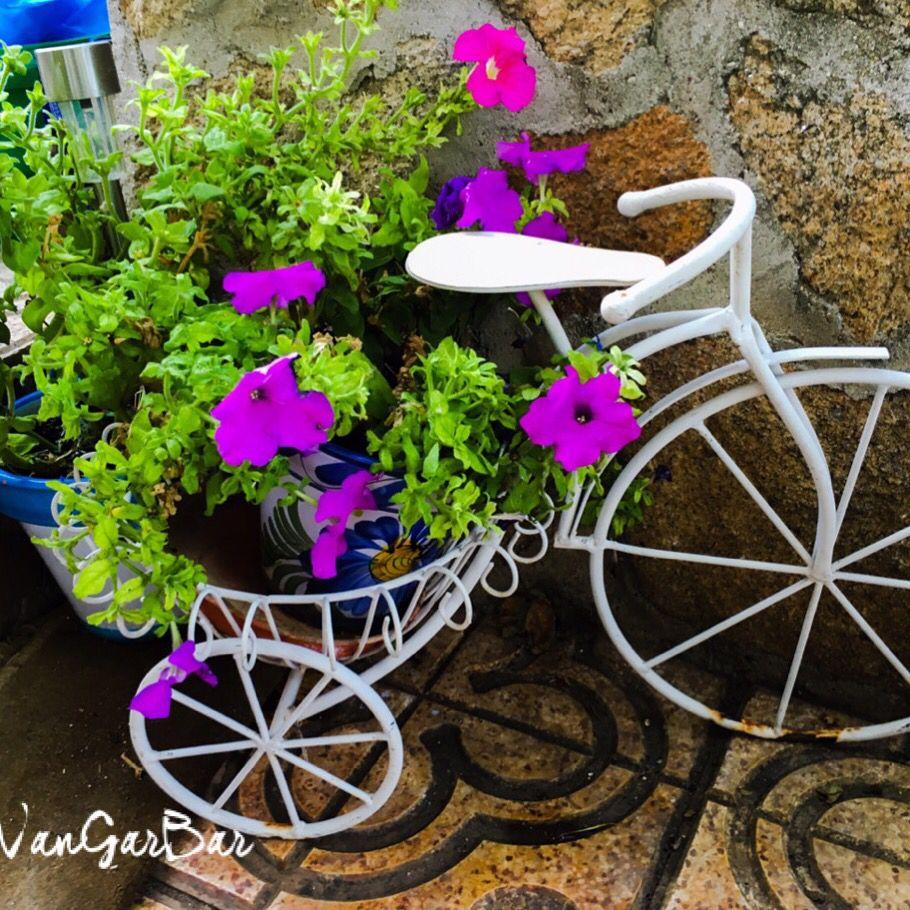 Buenos Días #photoftheday #garden #verdequetequieroverde # ...