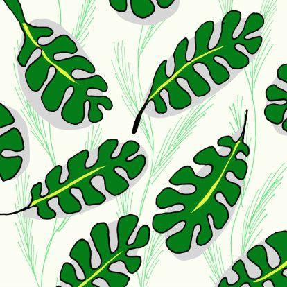 Gatenplant, monsteria, verkrijgbaar bij #kaartje2go voor €1,79