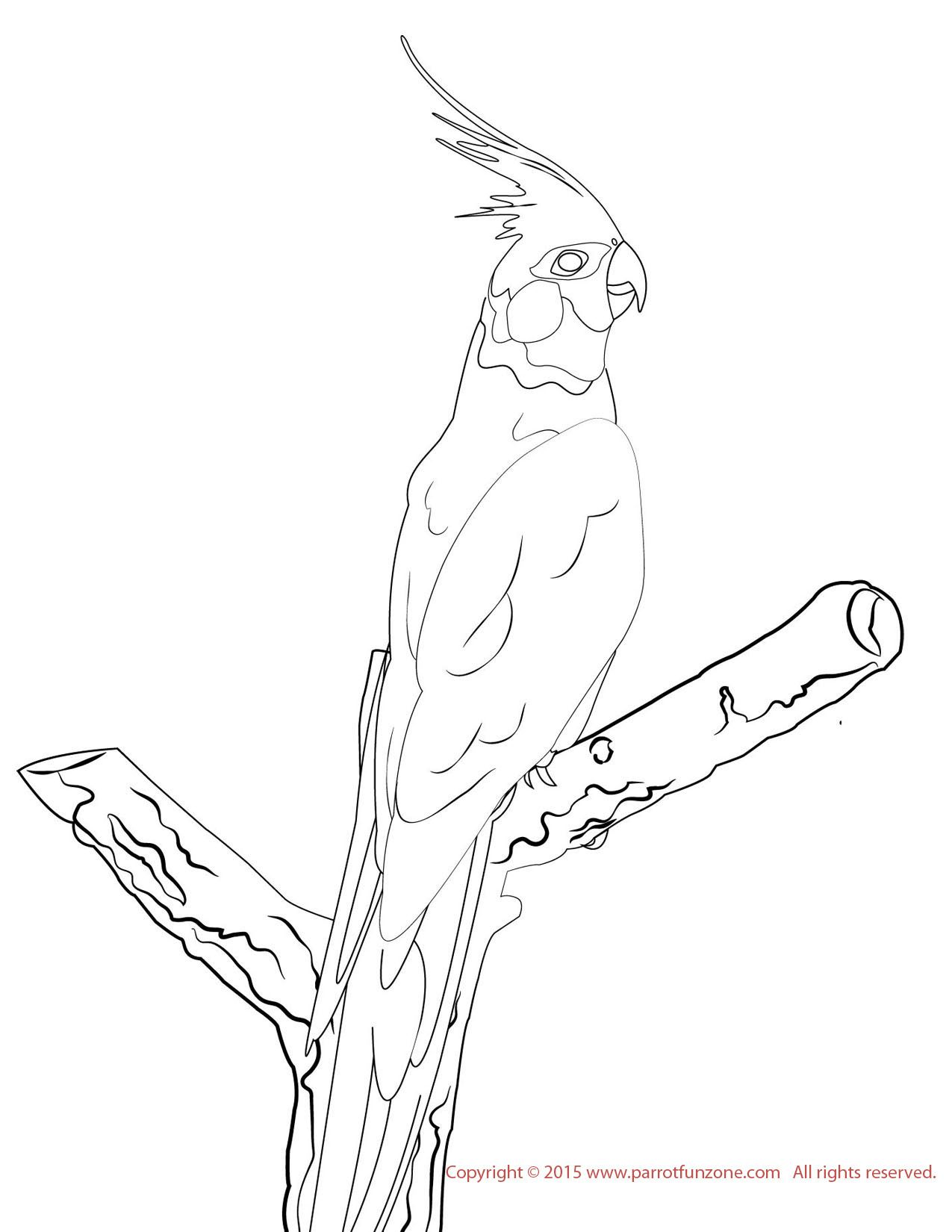 Cockatiel Coloring Page Bird Coloring Pages Coloring Pages