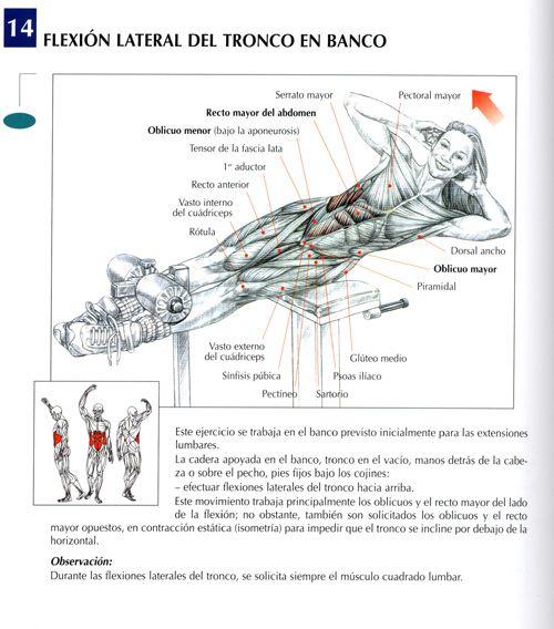 Flexion lateral de tronco en banco |Lateral trunk flexion on bench - http://fitnessallya.com/flexion-lateral-de-tronco-en-banco-lateral-trunk-flexion-on-bench/