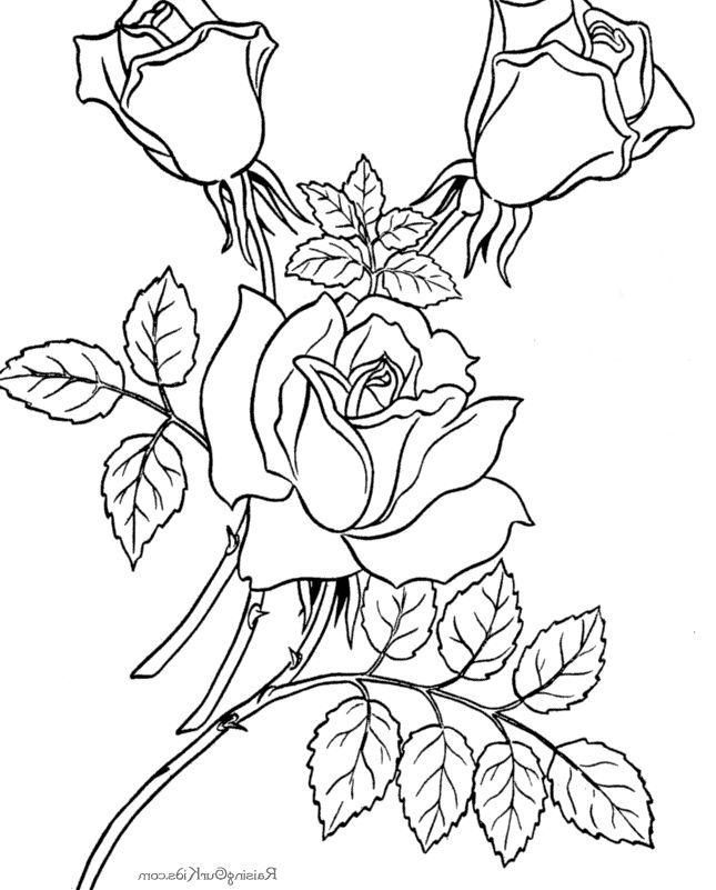 I have download The Charming Flower Coloring Page | Rose ...