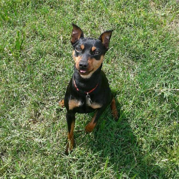 Www All Spca Houton Com My Lost Baby Houston Spca Animals Dogs Spca