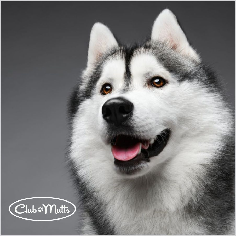 Learn How We Take The Best Care Of Your Double Coated Dog Https