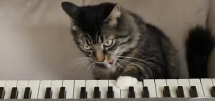 """""""The Strange World of Max X"""" Goes to the Cats 