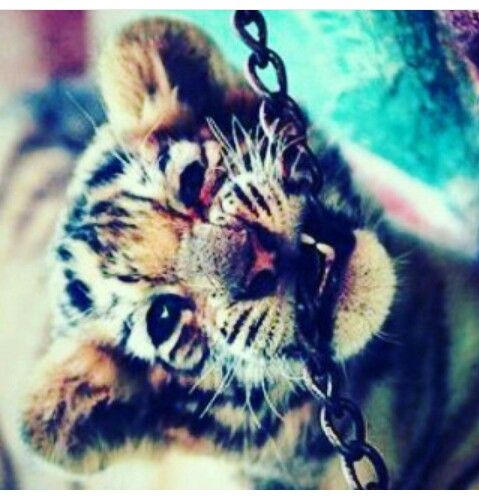Pin By Yaya Dup On Yaya Cute Tigers Cute Tiger Cubs Animals